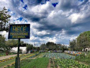 Tour in bicicletta sull'isola di Sant'Erasmo con degustazione di miele e prodotti locali