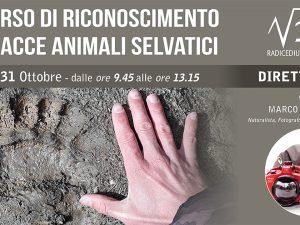 CORSO DI RICONOSCIMENTO TRACCE ANIMALI SELVATICI
